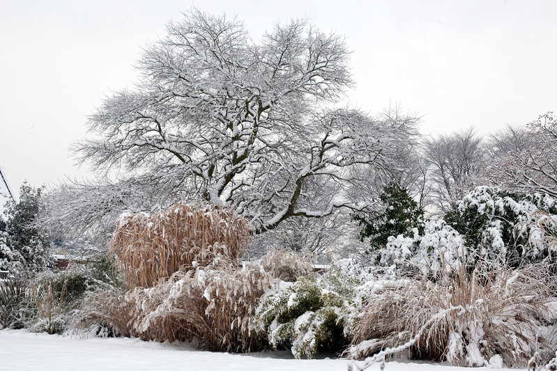 Winterbourne Botanic Garden in snow