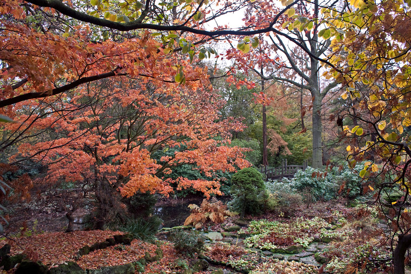 Winterbourne Botanic Garden autumn view