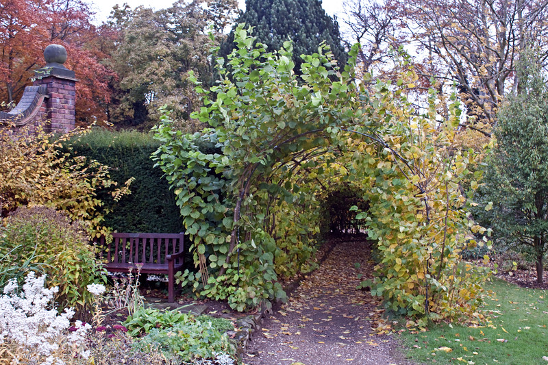 Willow Tunnel at Winterbourne Botanic Garden