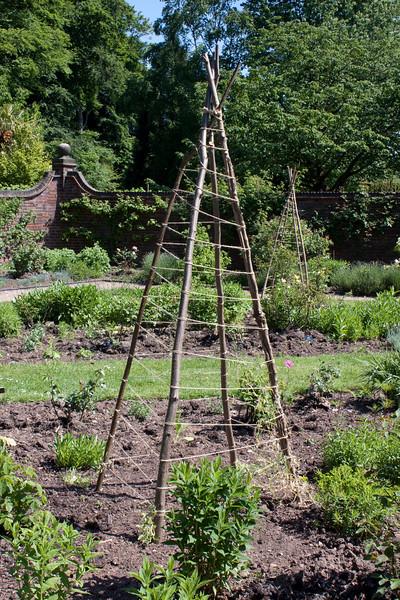 Natural plant support at Winterbourne Botanic Garden