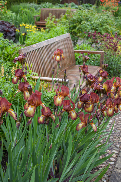 wooden  benches in the hot border in the Llanhydrock Garden at Wollerton Old Hall Garden, May