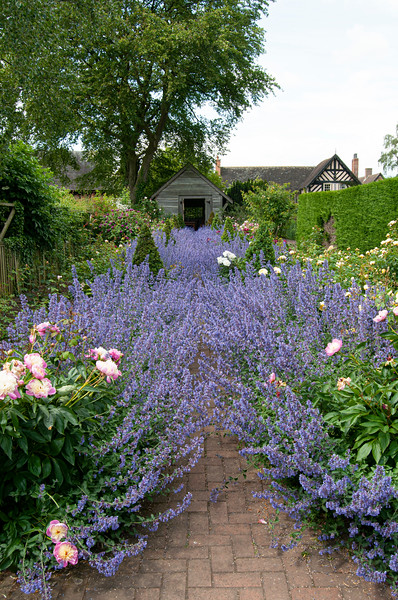 view through The Rose Garden at Wollerton Old Hall Garden, Shropshire, June,
