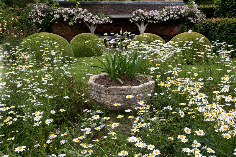 Rosa 'Frances Lester' and leucanthemum in The Font Garden at Wollerton Old Hall Garden, June