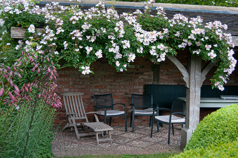rosa 'Frances Lester' growing over covered seating area in The Font Garden at Wollerton Old Hall Garden, Shropshire, June,