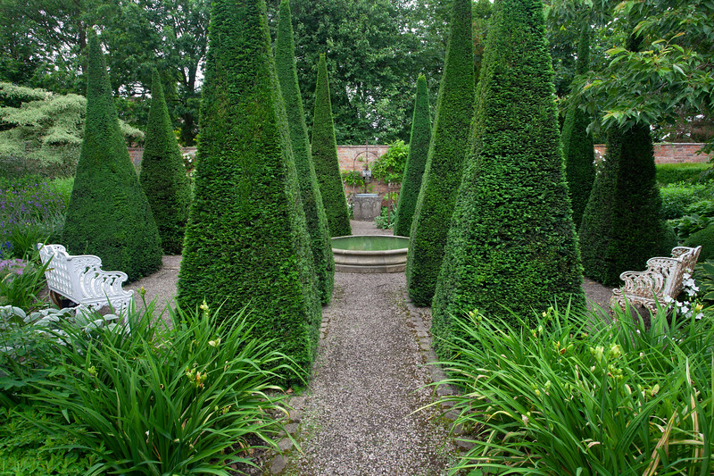 yew pyramids in the Well Garden at Wollerton Old Hall Garden, June