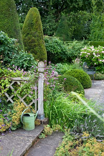 Wollerton Old Hall Garden, clematis 'Cicciolino'