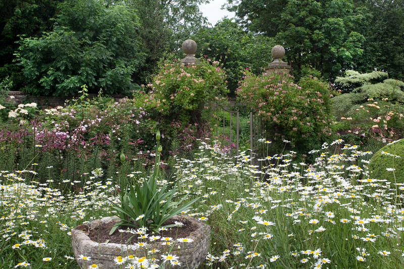 leucanthemum, lilies and honeysuckle in The Font Garden at Wollerton Old Hall Garden, June