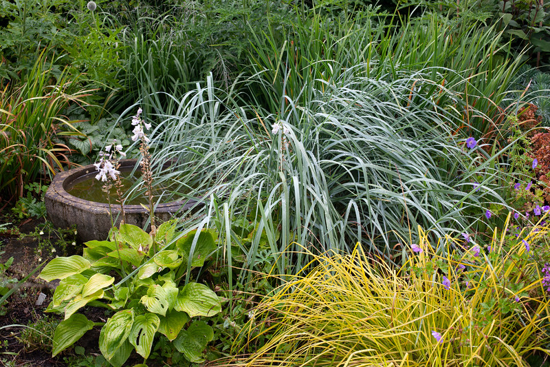 mixed grasses and hosta by the stone bird bath in Alice's Garden at Wollerton Old Hall Garden, July