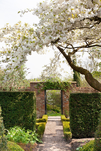 blossom in the Well Garden at Wollerton Old Hall Garden, April