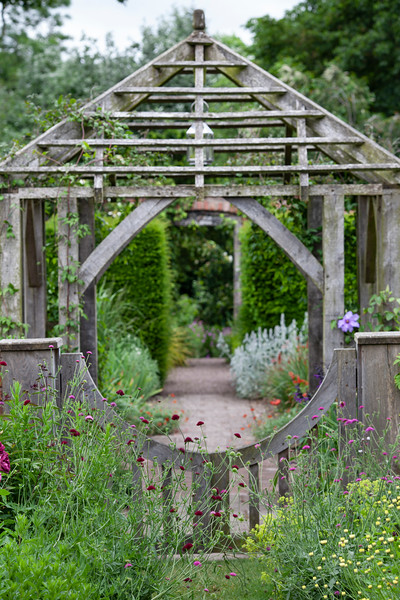 knautia in front of wooden gate leading to oak framed pergola in Llandrydrock Garden at Wollerton Old Hall Garden, June