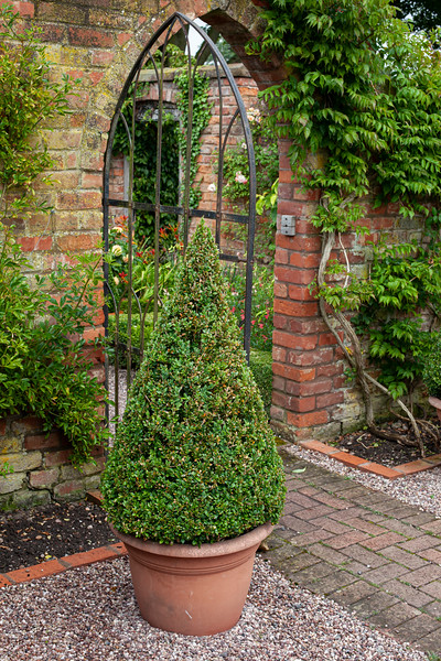 box topiary at Wollerton Old Hall Garden, July