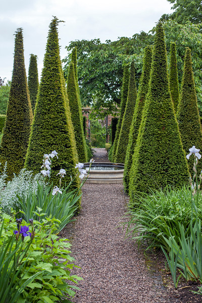 yew pyramids in The Well Garden at Wollerton Old Hall Garden, May