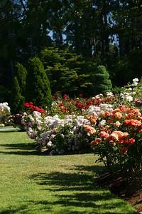 rosegarden43