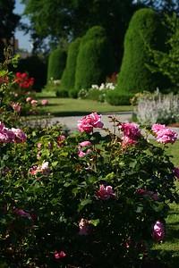 rosegarden25