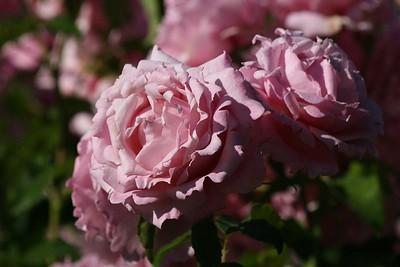 rosegarden32