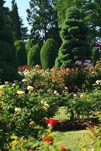 rosegarden31