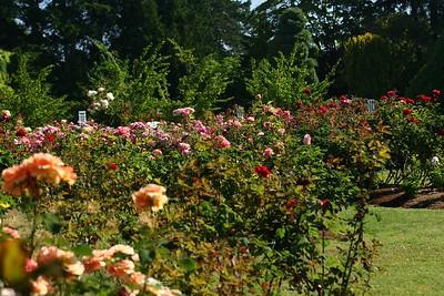 rosegarden44