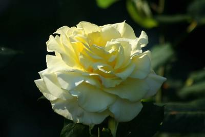 rosegarden05