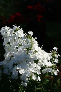 rosegarden19