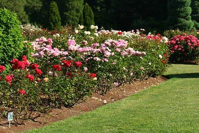 rosegarden02