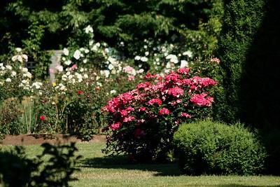 rosegarden09