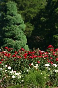 rosegarden10