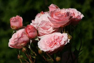rosegarden36