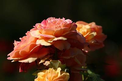 rosegarden38