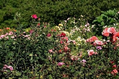 rosegarden04