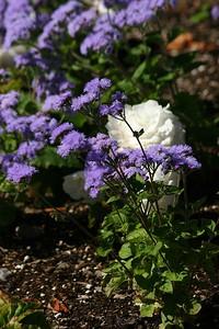 rosegarden39