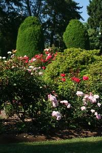 rosegarden21
