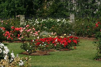 rosegarden26