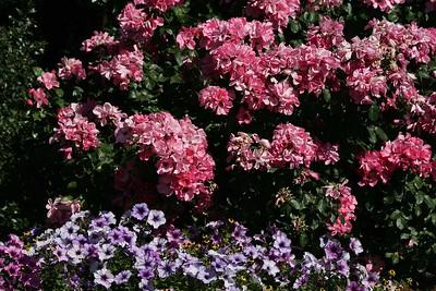 rosegarden42