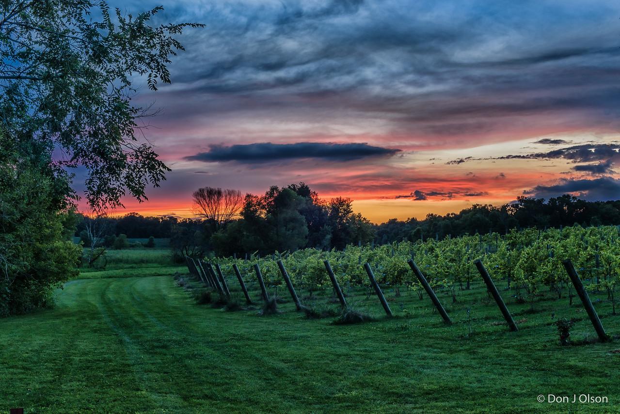 Luceline Orchard Vineyard at sunset. Aug 16, 2016
