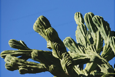 Cactus and sky