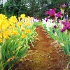 Path Through the Iris
