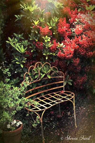 Bench in the Rhodie Garden