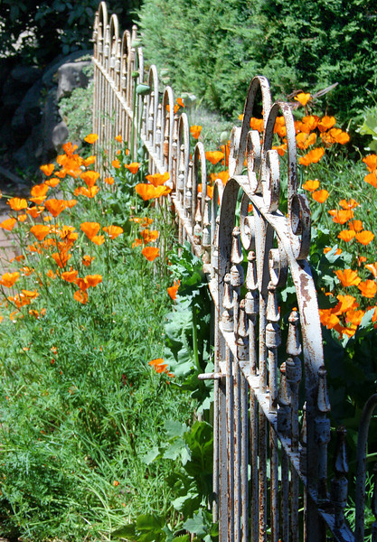 Iron Gate and Poppies