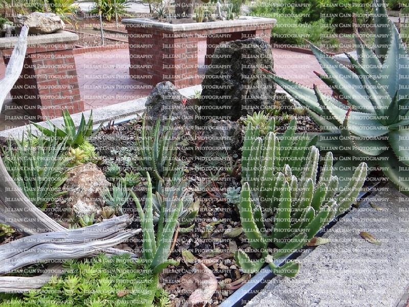 cactus garden on brick table tops