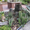 cactus garden on brick table tops
