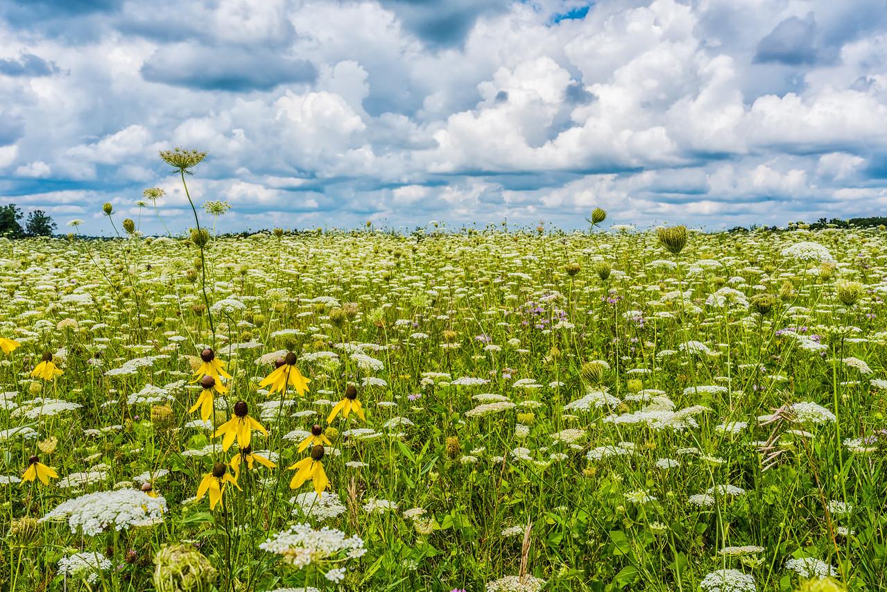 Wildflower field on top of Bluffs near Rushford, MN.