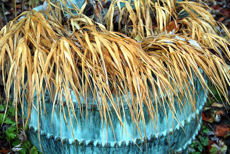Blue Pot and Dried Grasses