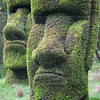 Easter Island topirary1