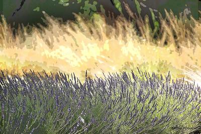lavender, Abiquiu, NM