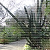 large arching cactus