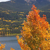 Fall colors, aspens, Twin Lakes, Co