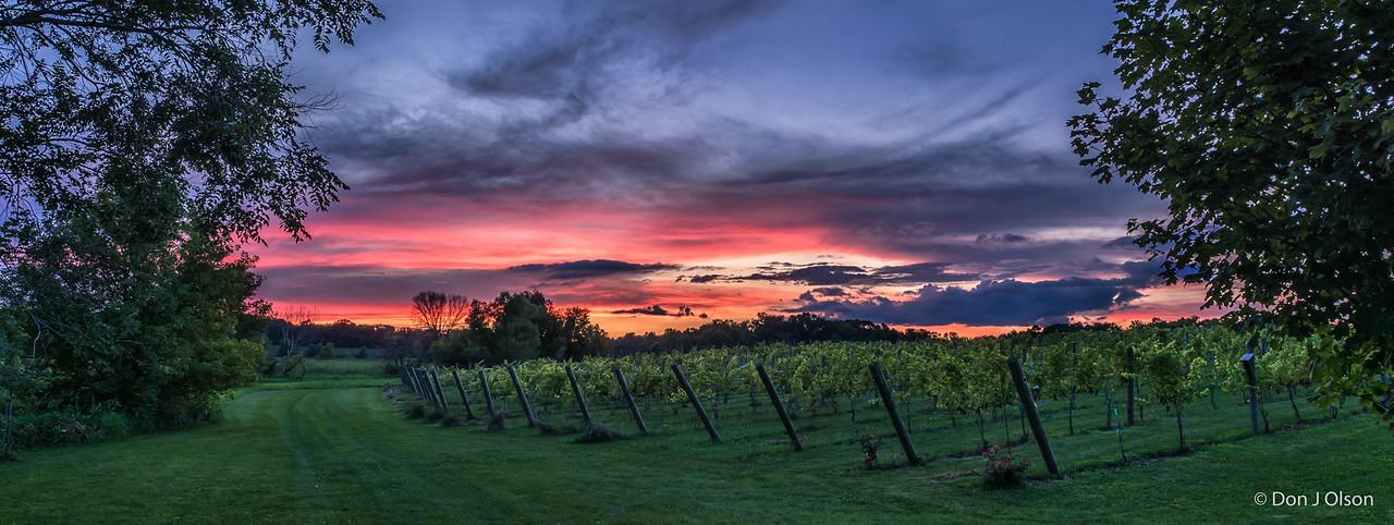 Luceline Orchard Vineyard Pano at sunset. Aug 16, 2016