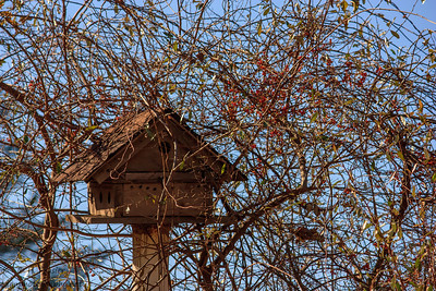 McKeldin Area Patapsco State Park: Marriotsville, MD
