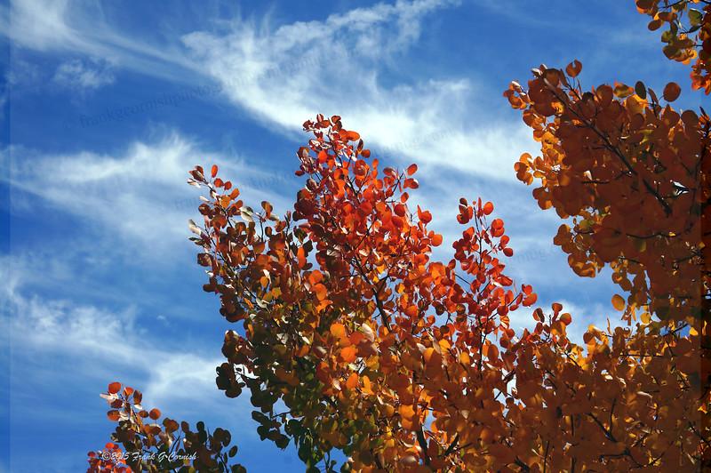 fall color colorado