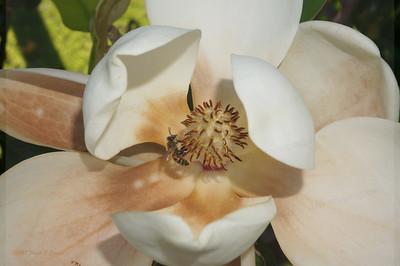 cliffhouse magnolia